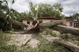 treeonhouse
